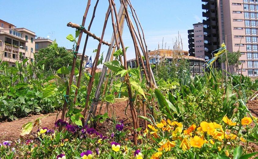 Orti-e-giardini-condivisi-Orti-Urbani-Garbatella-Foto-Zappata-Romana-02-e1596538466953