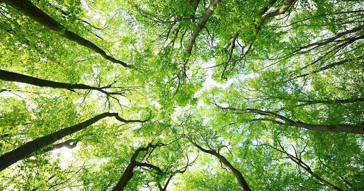 alberiforesta-1