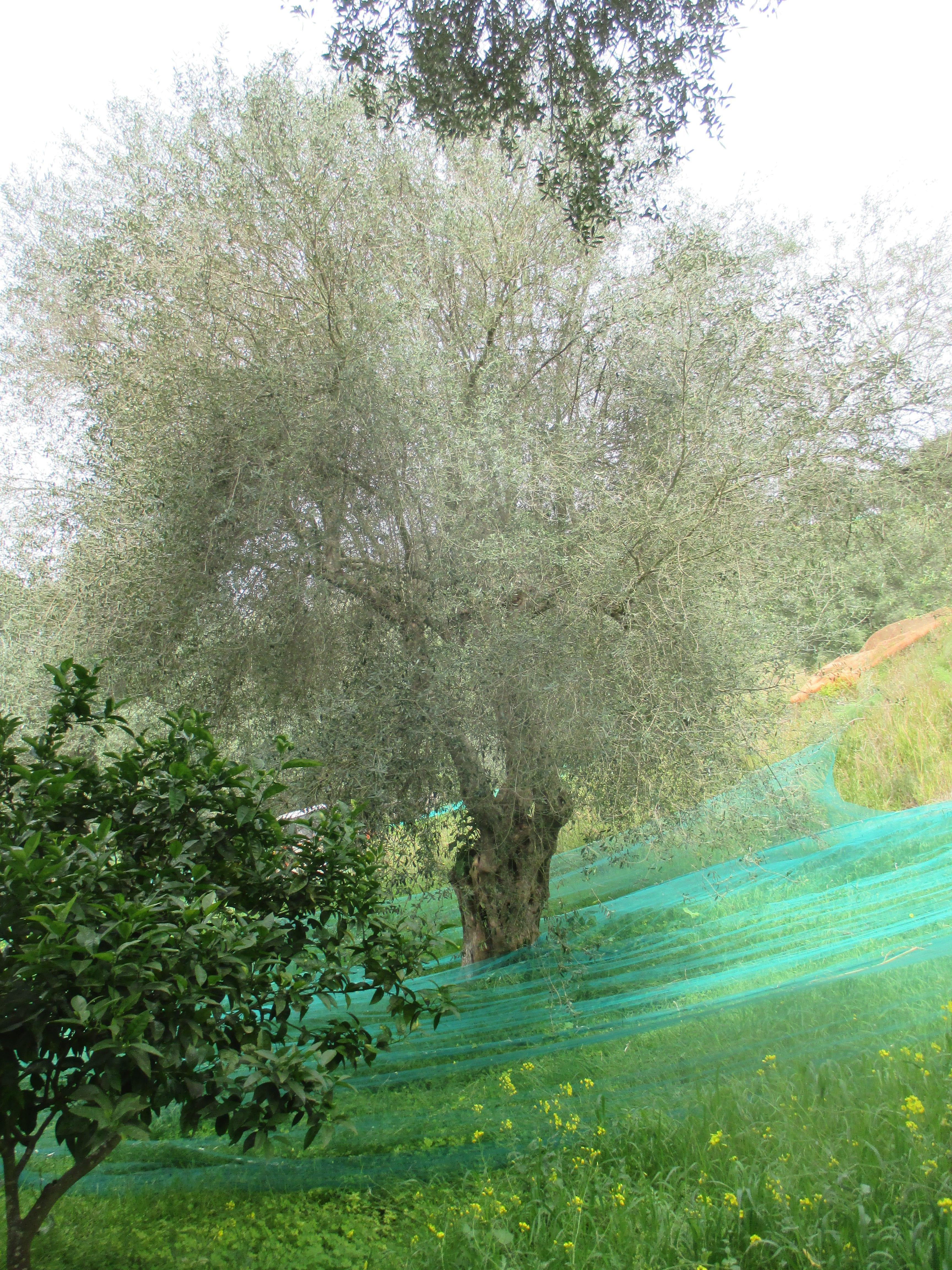 albero-1-1-e1617791107131